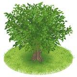 Tree in green field Royalty Free Stock Photo