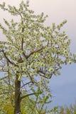 Tree on green field at sundown Stock Photography
