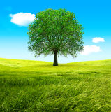 Tree and green fields Stock Photo