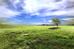 Tree and green fields Royalty Free Stock Images
