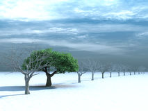 Tree with a green foliage on snow Stock Photography