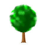 Tree with green foliage Stock Images