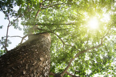 Tree. Green forest background in a sunny day Royalty Free Stock Photos