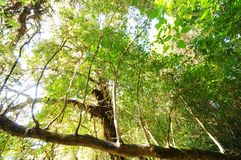 The tree in a green forest Royalty Free Stock Photography