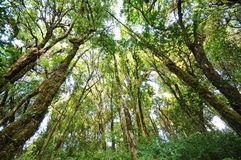 The tree in a green forest Royalty Free Stock Photo