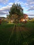 Tree. Green tree in the garden Stock Photo