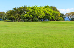Tree on green grass field Royalty Free Stock Images