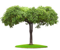 Tree on green grass field Royalty Free Stock Photo
