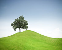Tree on a green grass hill stock photos