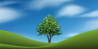 Tree on green grass hill with blue sky. Abstract background park and outdoor. Tree on green grass hill with blue sky. Abstract background park and outdoor for vector illustration