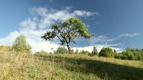 Tree on the green grass hill with cloud. Romanian mountain with a three and clouds stock video footage