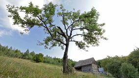 Tree on the green grass hill with cloud and Manor. Romanian mountain with a three and clouds stock video footage
