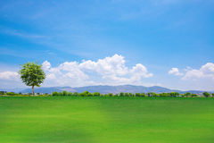 Tree on a green grass hill Royalty Free Stock Photography