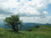 Tree and green hill. Green tree and green mountains Stock Images