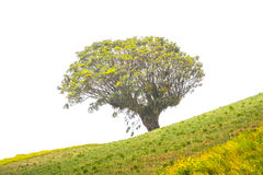 Tree on a green hill with grass Stock Image