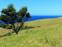 Green hill with tree at ocean by blue sky Royalty Free Stock Images