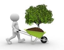 Tree Green In Wheelbarrow Royalty Free Stock Image