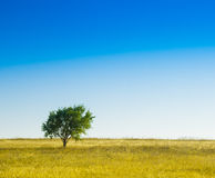 Tree on Green Land. Royalty Free Stock Photography