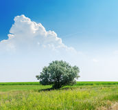 Tree on green landscape under white clouds in blue sky Stock Photography