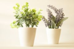 Tree in green and lavender in pot in soft tone background. Tree in green and lavender in pot in soft tone stock photo