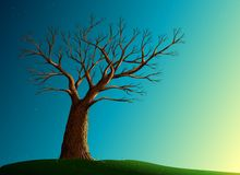 Tree on green lawn Royalty Free Stock Photo