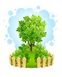 Tree on green lawn with wooden fence. Illustration isolated white background Royalty Free Stock Photo