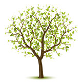 Tree with green leafage Royalty Free Stock Images
