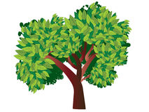 Tree with Green Leafage Stock Images