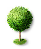 Tree with green leafage isolated Stock Photos