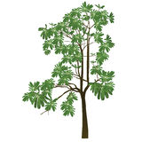 A tree with green leafs Stock Photos