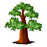 Tree with green leaves Stock Photo