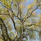 Tree with green leaves Royalty Free Stock Photos