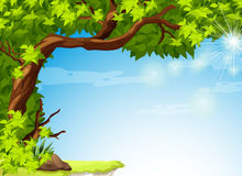 A tree with green leaves and the clear blue sky Stock Image