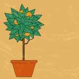 Tree with green leaves and fruit in a flower pot i Royalty Free Stock Photography
