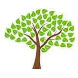 Tree with green leaves Stock Photos