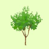 Tree green leaves polygon graphic vector
