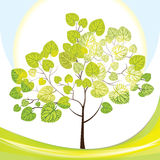 Tree with green leaves, sunny day. Vector illustration, summer landscape stock illustration
