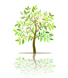 Tree with green leaves vector Stock Images