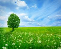 Tree in green meadow Royalty Free Stock Photography