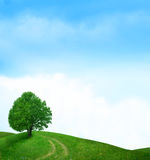 Tree in green meadow Royalty Free Stock Images