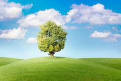 Tree on green meadow before blue sky Royalty Free Stock Photos