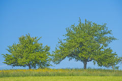 Tree on a green meadow Royalty Free Stock Photos