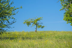 Tree on a green meadow Stock Images