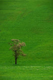Tree on a green meadow portrait Stock Image