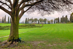 Tree on green meadow. Sigurta Park, Italy. Royalty Free Stock Photography