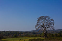 Tree in green meadow under blue sky Stock Images