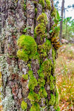 Tree with green moss Royalty Free Stock Photo