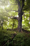 Tree in green nature forest Royalty Free Stock Photography