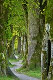 Tree, Green, Nature, Woodland Stock Images