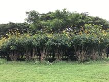 Tree. Green park outdoor Stock Photo